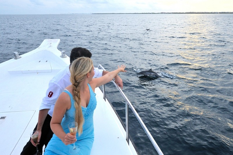 Dolphin_Cruise.1