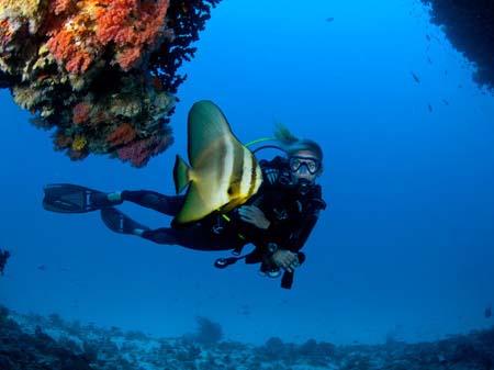 diving velaa
