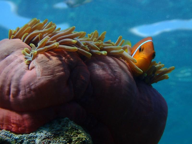 Milaidhoo-Maldives-underwater-house-reef-2