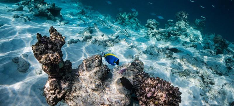 kuda_rah_snorkeling