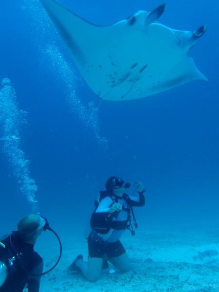 Manta Rays ©Baros Maldives (1)feature