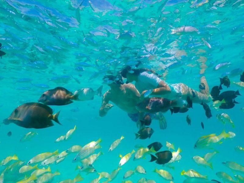 Kagi Maldives snorkeling